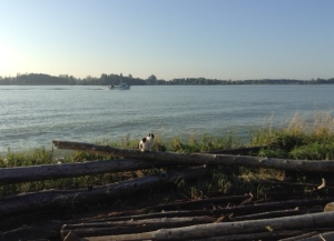 River driftwood, fishing boat and cat -a day in the life of the River