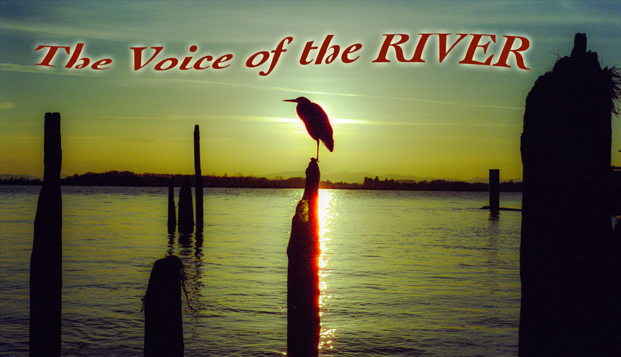 The Voice of the River heron on the Fraser